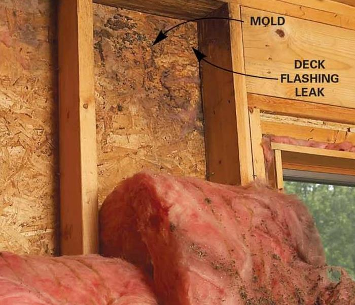 Water Damage Sparta, IL Residents:  Follow These Mold Safety Tips If You Suspect Mold
